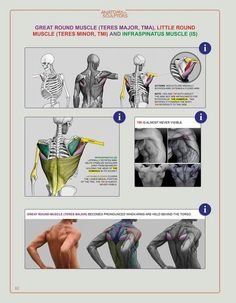 Exceptional Drawing The Human Figure Ideas. Staggering Drawing The Human Figure Ideas. Anatomy Back, Gross Anatomy, Muscle Anatomy, Anatomy Study, Body Anatomy, Anatomy Drawing, Male Figure Drawing, Figure Drawing Reference, Guy Drawing