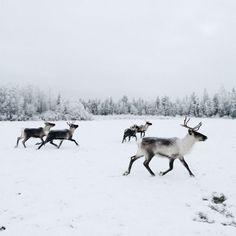 Walking in a Winter Wonderland :: This is Glamorous
