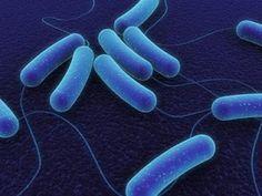BIOLOGÍA, CULTURA CIENTÍFICA: LAS BACTERIAS SE COMUNICAN COMO LAS NEURONAS