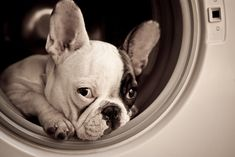 ...you never know where they will show up, my frenchie was on Top of the washer the other day...lil gremlin!