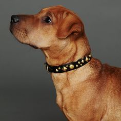 Xdog Studded Leather Dog Collar by Paco Collars