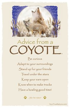 Advice from a Coyote- Postcard- Your True Nature