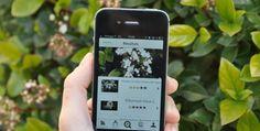 3 Apps gratuitas para la identificación de plantas - 3 Free Apps for plant identification • Montessori en Casa