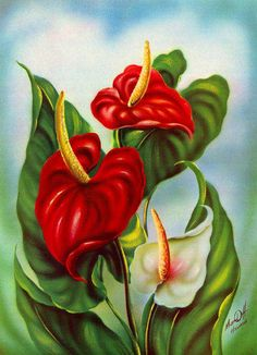 Vintage Anthurium Print by Ted Mundorff Oil Painting Flowers, China Painting, Fabric Painting, Tropical Flowers, Hawaiian Art, Flower Art, Beautiful Flowers, Canvas Art, Fine Art