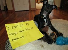 I eat all my toys then throw them up! For Ags :)