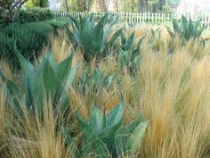 How to create focal points in the #garden