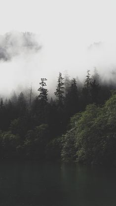 Bradley Castaneda - Photographer Designer Adventurer - Wallpapers - Pack #9 - iPhone5 fog and tress