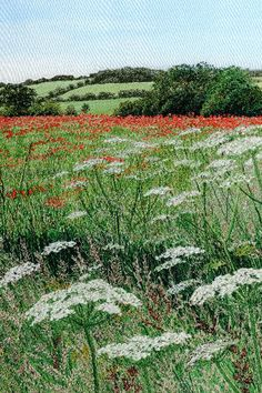Greeting cards from Alison Holt BA - Artist