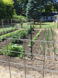 My garden fence