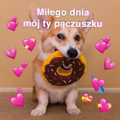 Cute Sentences, Cute Messages, Cute Texts, Pick Up Lines, Wholesome Memes, Reaction Pictures, Funny Cute, Cute Dogs, Cute Pictures
