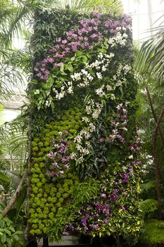 First glimpse of the #orchidshow Patrick Blanc's Vertical Gardens!