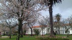 Já cheira a Primavera no Jardim Teófilo Braga (Praça da República)