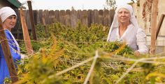 The New Age nuns are fighting to keep their medical marijuana business alive in the face of a pending local ban on cannabis sales.