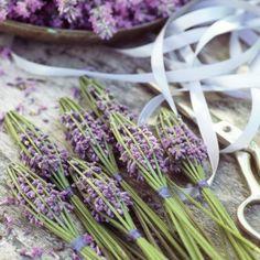 Lavender bunches or wands Lavender Cottage, French Lavender, Lavender Blue, Lavender Fields, Lavender Flowers, Dried Flowers, Lavender Bouquet, Lavender Wands, Lavender Crafts