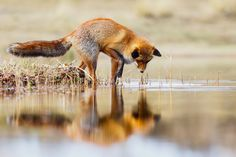 Mirror by Pim Leijen on 500px