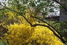 A nice bright yellow--very cheery!