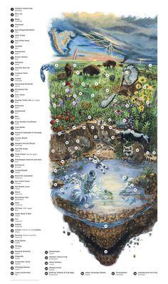 Flint Hills Map - Middle School by Kori Green Kansas Day, Flint Hills, Plant Science, Nature Study, Flora And Fauna, Middle School, Signage, Grass, Homeschool