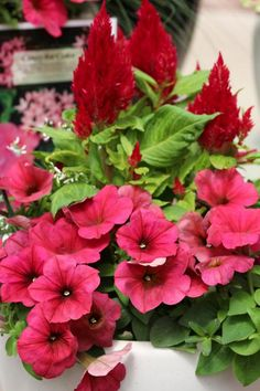HGTV Gardens recommends these beautifully draping flowers and plants for your hanging baskets and containers.