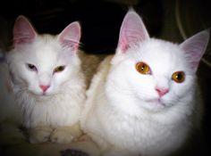 "(@hmss40) on Instagram: ""Ripley & Jasmine❤️🐾 #love #rescues #cat #cats #catlady #rescuekitties #rescuecatsofinstagram…"""