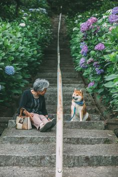 Series Of Heartwarming Pics Capture Womans Relationship With Her Shiba Inu - World's largest collection of cat memes and other animals Shiba Inu, Bull Terriers, Husky Corgi, Corgi Puppies, Animals And Pets, Cute Animals, Japanese Dogs, Japanese Aesthetic, Belle Photo