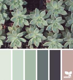 Succulent Hues   design seeds   Bloglovin'
