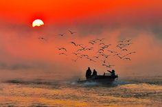 Awesome Ship leading gulls