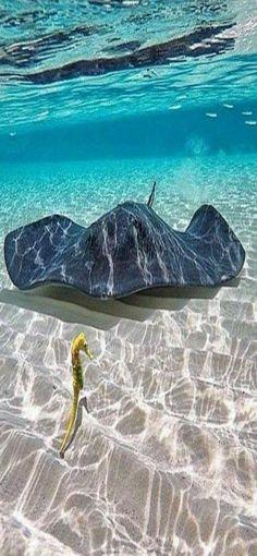 Under The Water, Under The Sea, Underwater Creatures, Underwater Life, Ocean Creatures, Beautiful Sea Creatures, Animals Beautiful, Majestic Animals, Pictures Of Sea Creatures
