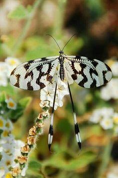 So pretty..species unknown