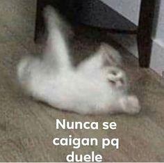 𝒅𝒆𝒎𝒂𝒔𝒊𝒂𝒅𝒂𝒔 𝒇𝒐𝒕𝒐𝒔 𝒅𝒆 𝒈𝒂𝒕𝒐𝒔 𝒍𝒍𝒐𝒓𝒂𝒏𝒅𝒐 𝒐 ?… #detodo # De Todo # amreading # books # wattpad Cute Memes, Funny Memes, Reaction Pictures, Funny Pictures, Random Pictures, Memes Lindos, Funny Spanish Memes, Cartoon Memes, Meme Faces