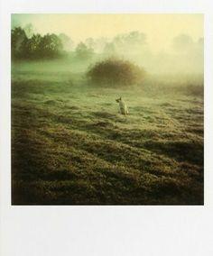 'Instant Light. Tarkovski Polaroids'