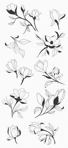 magnolia home inspiration Hand Sketched Magnolia Design Elements. Flower Design Vector, Vector Flowers, Flower Tattoo Designs, Flower Tattoos, Flower Designs, Botanical Flowers, Tropical Flowers, Small Tattoos, Tiny Tattoo