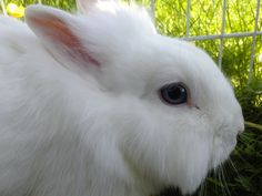 Rabbit, Animals, Bunny, Animais, Rabbits, Animales, Animaux, Animal, Hare