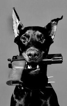 Baddog!