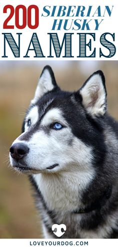 Looking for the perfect dog name for your Siberian Husky? In this article, you'll find over 200 different names for both boy and girl Husky pups! Husky Dog Names, Siberian Husky Names, Dog Information, Female Names, The Perfect Dog, Husky Puppy, Boy Names, Fun Activities, Your Dog