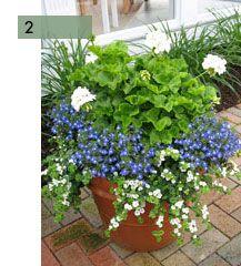 potee-fleurie-2-lobelias-geranium-bacopa