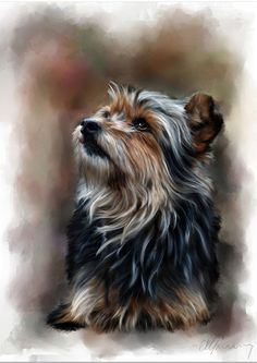 shaggy dog portrait
