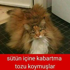 Sütün içine kabartma tozu koymuşlar. #mizah #matrak #komik #espri #şaka #gırgır #komiksözler #caps
