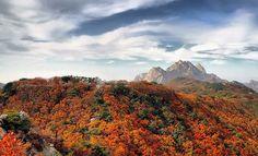 2014년 설악산, 오대산, 치악산, 지리산, 북한산, 내장산 단풍놀이 절정시기!! :: PALM's DIARY