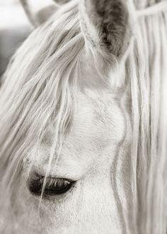 Focusing on White Horse II