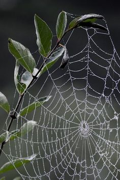 I have traveled many places, but spider webs always remind me of my beloved pacific northwest. Spider Art, Spider Webs, Itsy Bitsy Spider, Photo Journal, Amazing Spider, Belle Photo, Nature Photos, Amazing Nature, Beautiful World