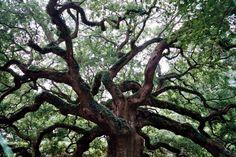 Angel Oak by Chris Moody