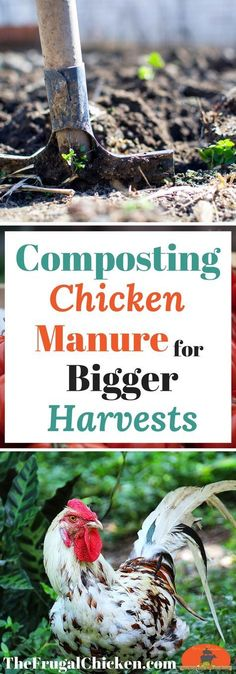 Want to make your own compost so you can have a bigger harvest this year? Here's how to compost chicken manure in just 9 simple steps!