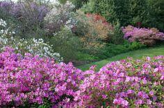 Biltmore - Visit America's largest home, built by George Vanderbilt. Biltmore Estate, Public Garden, Wine Tasting, Acre, Home And Garden, Places To Visit, Bloom, Flowers, Plants
