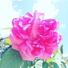 Uma beleza indescritível... ❤️