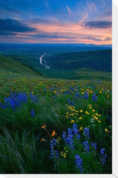 The sun sets over Selah, Washington as the Yakima River winds out of the Canyon beneath colorful wildflowers on Selah Butte. Selah, WA