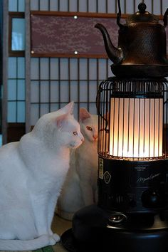 Cats warming up by the Japanese heater