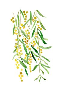 Mimosa print of original watercolor painting by TheJoyofColor. For the kitchen wall.