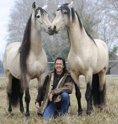 What gorgeous magnificent colored horses, twins.