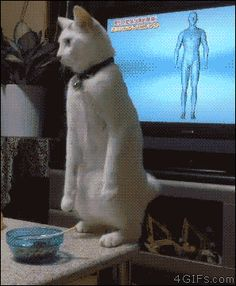 Share this A cat walks backwards on it's hind legs Animated GIF with everyone. Gif4Share is best source of Funny GIFs, Cats GIFs, Reactions GIFs to Share on social networks and chat.