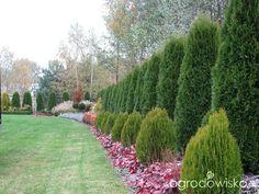 Arborvitae Landscaping, Landscaping A Slope, Modern Landscaping, Crepe Myrtle Landscaping, Garden Privacy, Backyard Plants, Garden Yard Ideas, Woodland Garden, Landscape Wallpaper